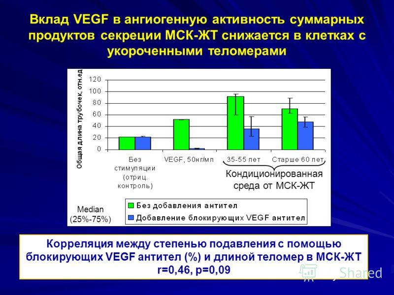 Вклад VEGF в ангиогенную активность суммарных продуктов секреции МСК-ЖТ снижается в клетках с укороченными теломерами Корреляция между степенью подавления с помощью блокирующих VEGF антител (%) и длиной теломер в МСК-ЖТ r=0,46, p=0,09 Кондиционирован
