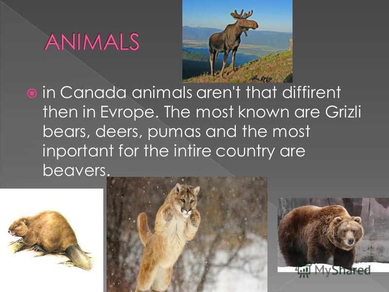 in Canada animals aren't that diffirent then in Evrope. The most known are Grizli bears, deers, pumas and the most inportant for the intire country are beavers.