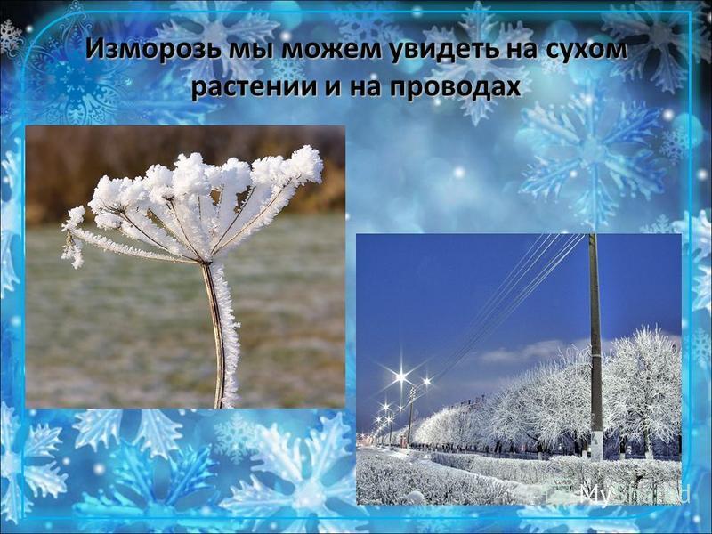 Изморозь мы можем увидеть на сухом растении и на проводах