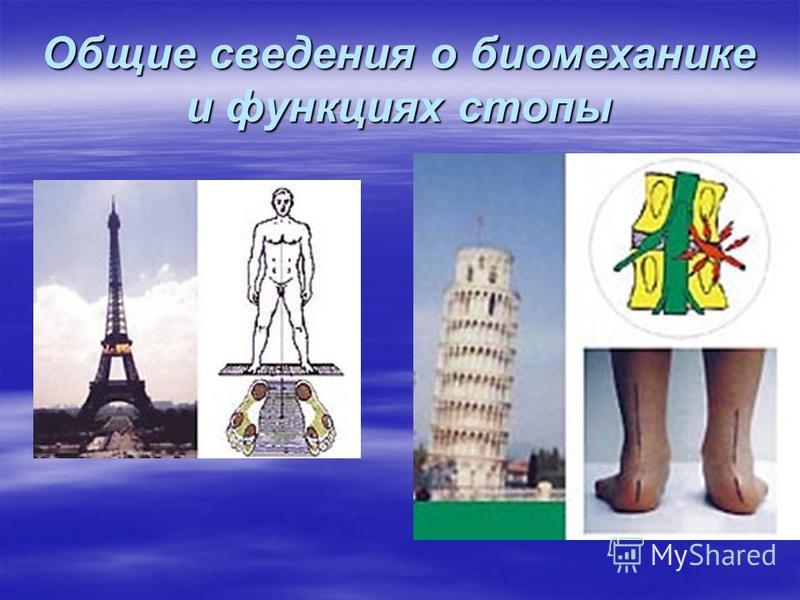 Общие сведения о биомеханике и функциях стопы