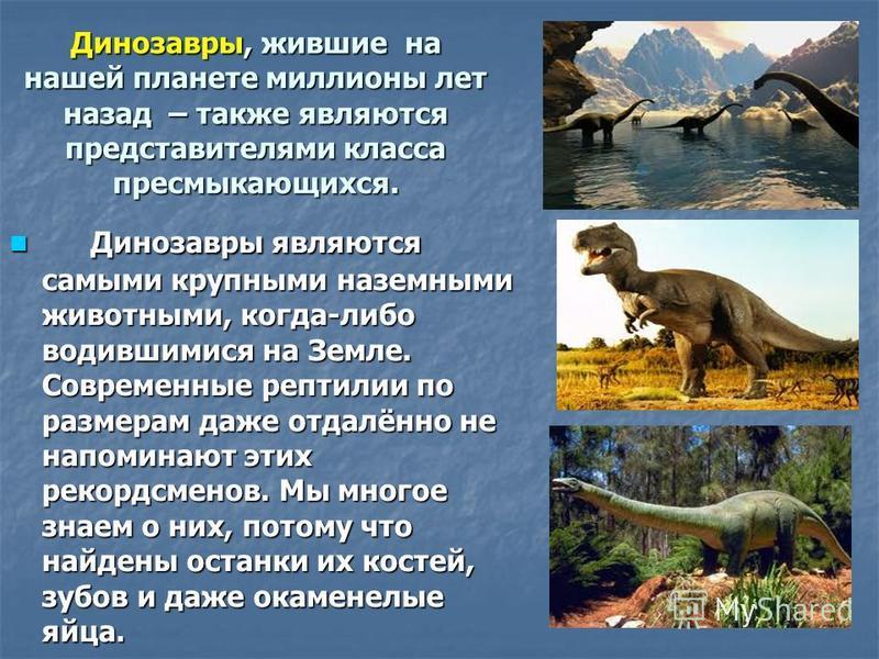 Динозавры, жившие на нашей планете миллионы лет назад – также являются представителями класса пресмыкающихся. Динозавры являются самыми крупными наземными животными, когда-либо водившимися на Земле. Современные рептилии по размерам даже отдалённо не