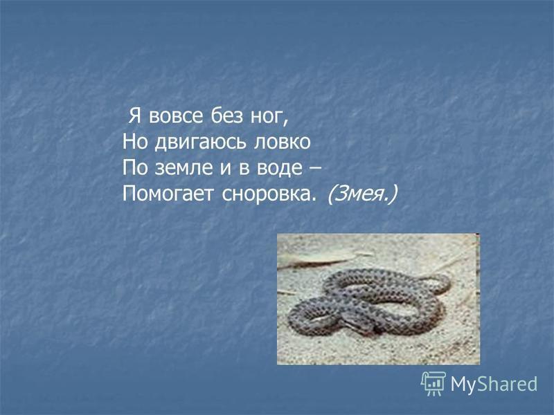 Я вовсе без ног, Но двигаюсь ловко По земле и в воде – Помогает сноровка. (Змея.)