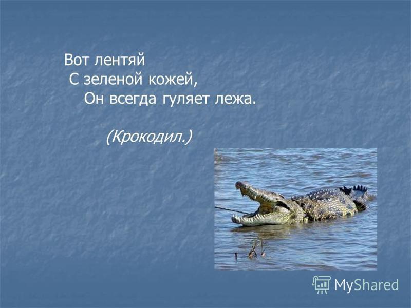 Вот лентяй С зеленой кожей, Он всегда гуляет лежа. (Крокодил.)