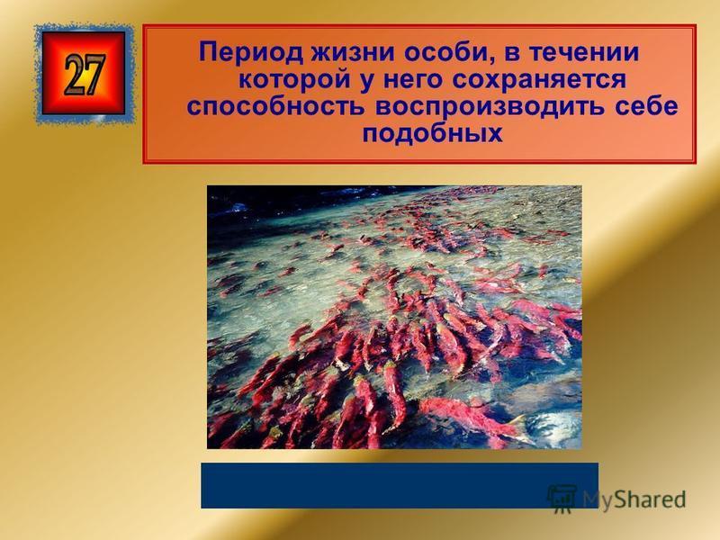 Период жизни особи, в течении которой у него сохраняется способность воспроизводить себе подобных Репродуктивный период