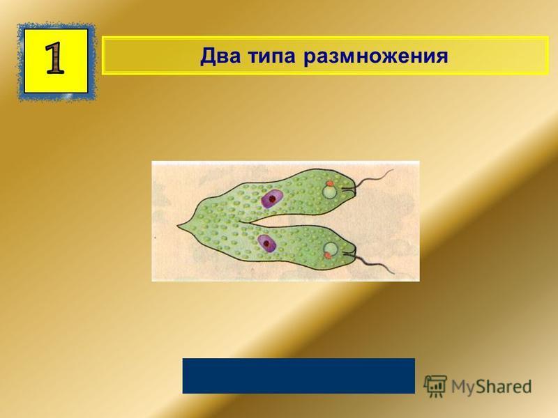 Два типа размножения Половое и бесполое
