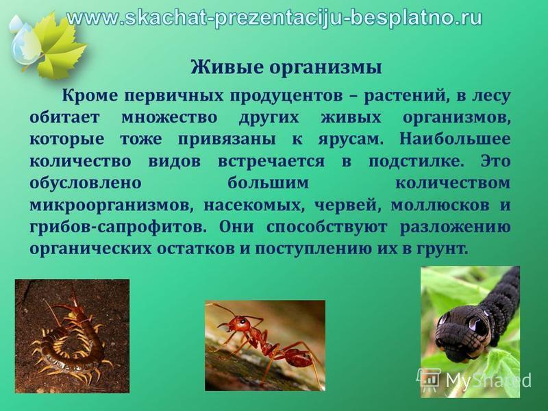 Живые организмы Кроме первичных продуцентов – растений, в лесу обитает множество других живых организмов, которые тоже привязаны к ярусам. Наибольшее количество видов встречается в подстилке. Это обусловлено большим количеством микроорганизмов, насек