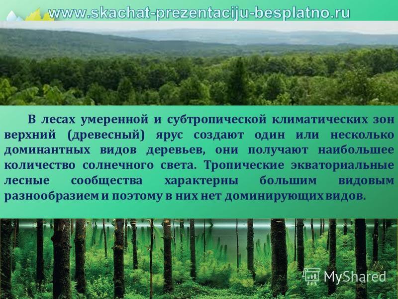В лесах умеренной и субтропической климатических зон верхний (древесный) ярус создают один или несколько доминантных видов деревьев, они получают наибольшее количество солнечного света. Тропические экваториальные лесные сообщества характерны большим