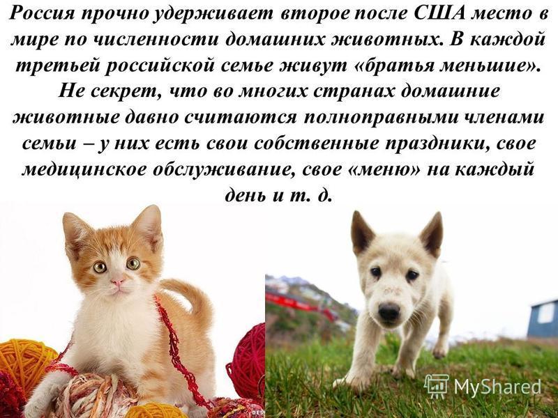 Россия прочно удерживает второе после США место в мире по численности домашних животных. В каждой третьей российской семье живут «братья меньшие». Не секрет, что во многих странах домашние животные давно считаются полноправными членами семьи – у них
