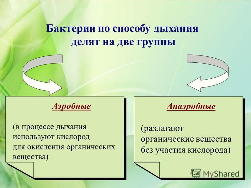 Бактерии по способу дыхания делят на две группы Анаэробные (разлагают органические вещества без участия кислорода) Анаэробные (разлагают органические вещества без участия кислорода) Аэробные (в процессе дыхания используют кислород для окисления орган