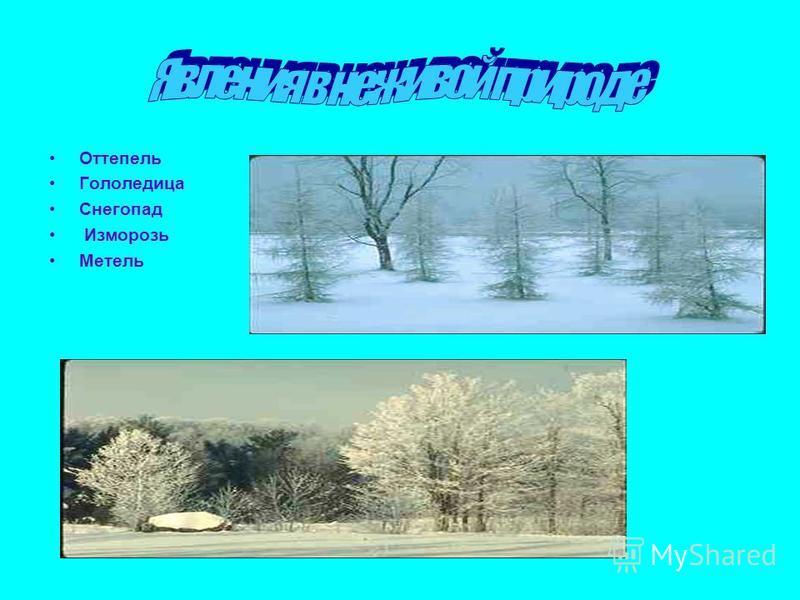 Явления в неживой природе Оттепель Гололедица Снегопад Изморозь Метель