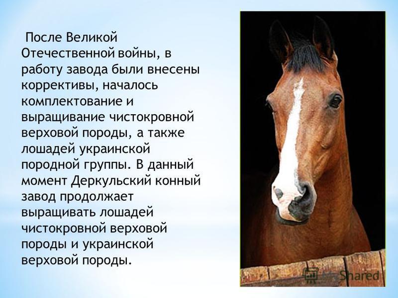 После Великой Отечественной войны, в работу завода были внесены коррективы, началось комплектование и выращивание чистокровной верховой породы, а также лошадей украинской породной группы. В данный момент Деркульский конный завод продолжает выращивать