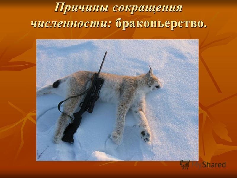 Причины сокращения численности: браконьерство.