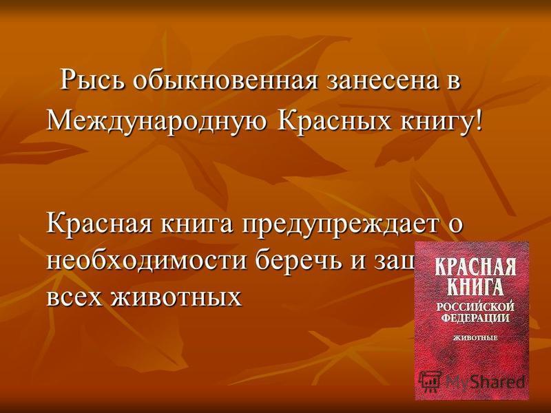 Рысь обыкновенная занесена в Международную Красных книгу! Рысь обыкновенная занесена в Международную Красных книгу! Красная книга предупреждает о необходимости беречь и защищать всех животных