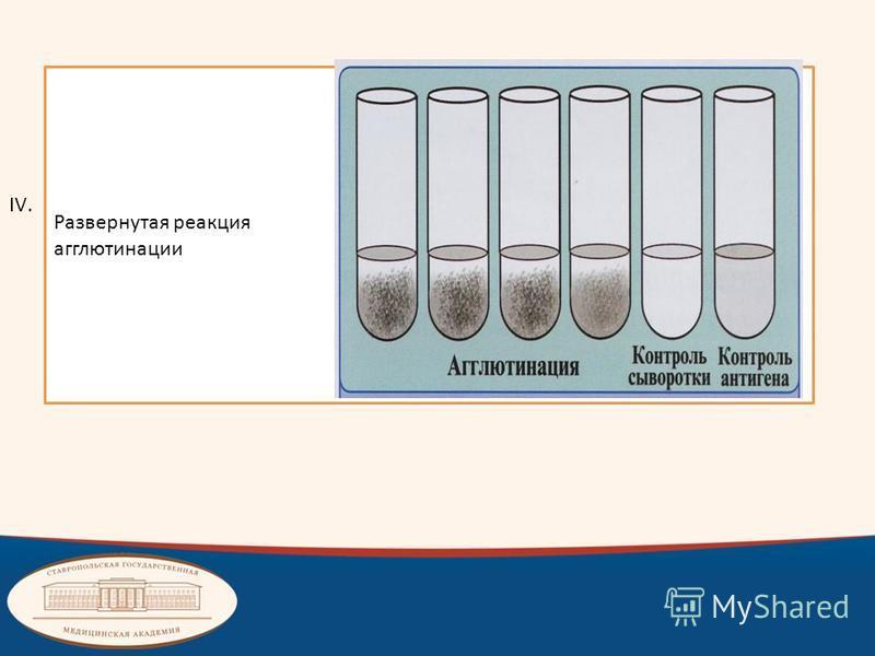 Развернутая реакция агглютинации IV.