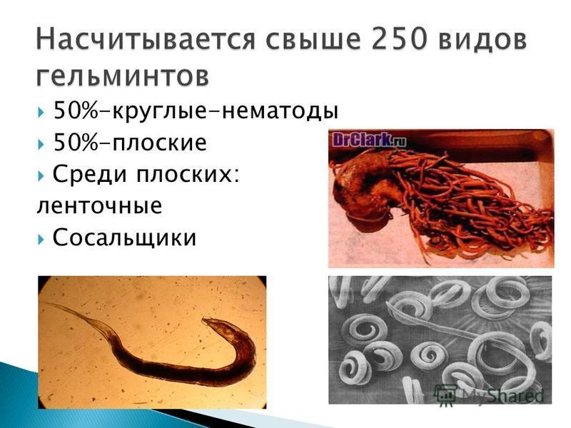 50%-круглые-нематоды 50%-плоские Среди плоских: ленточные Сосальщики