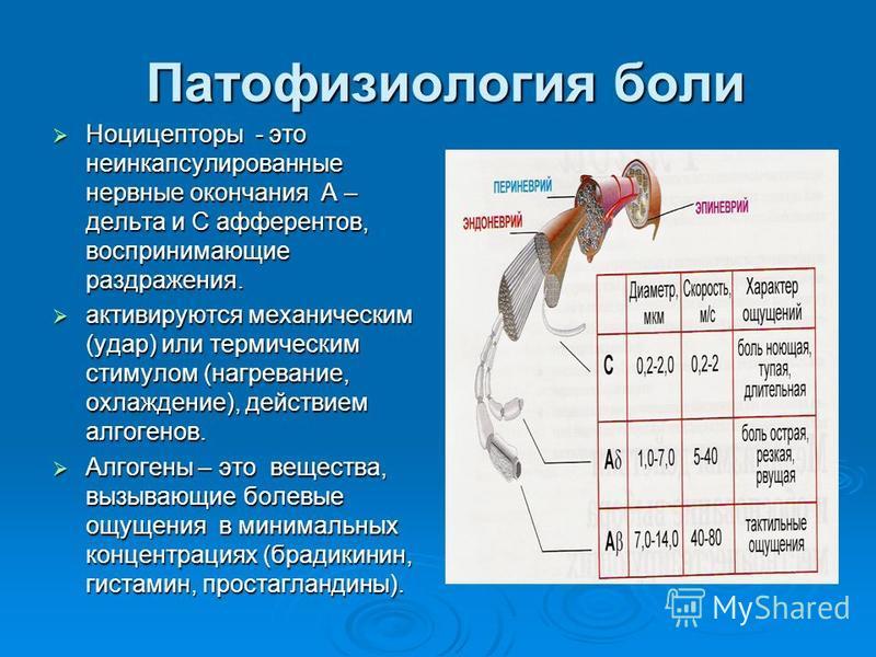 Патофизиология боли Патофизиология боли Ноцицепторы - это неинкапсулированные нервные окончания А – дельта и С афферентов, воспринимающие раздражения. Ноцицепторы - это неинкапсулированные нервные окончания А – дельта и С афферентов, воспринимающие р