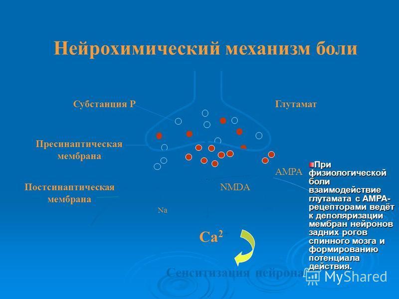 Глутамат Субстанция Р Пресинаптическая мембрана Постсинаптическая мембрана AMPA NMDA NK-1 Na + Mg 2+ Ca 2+ Сенситизация нейрона Нейрохимический механизм боли При физиологической боли взаимодействие глутамата с АМРА- рецепторами ведёт к деполяризации