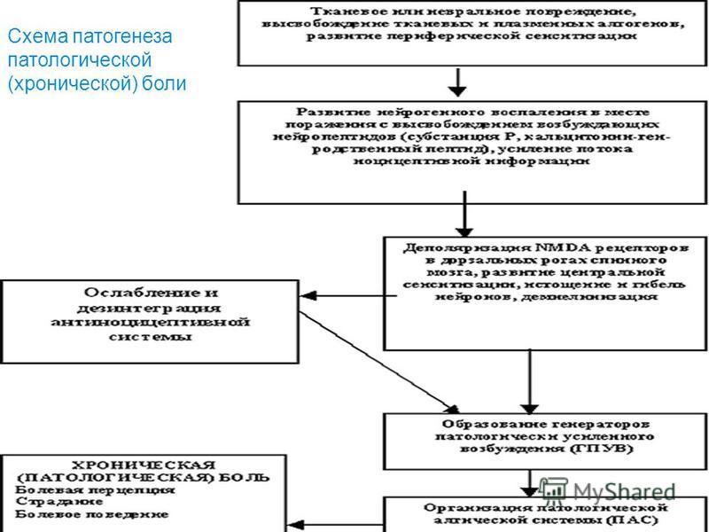 Схема патогенеза патологической (хронической) боли