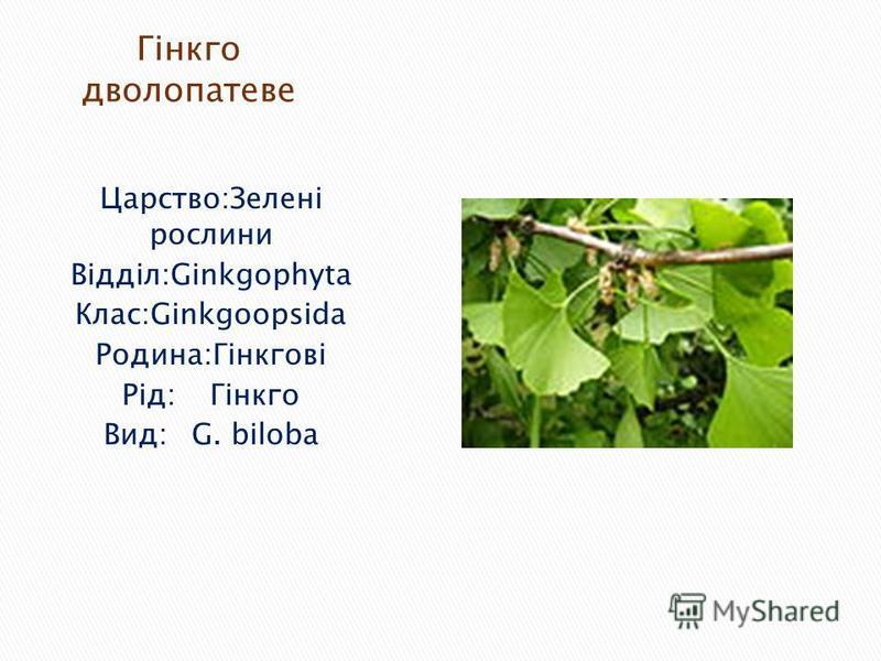 Царство:Зелені рослини Відділ:Ginkgophyta Клас:Ginkgoopsida Родина:Гінкгові Рід:Гінкго Вид:G. biloba