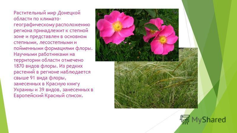Растительный мир Донецкой области по климато- географическому расположению региона принадлежит к степной зоне и представлен в основном степными, лесостепными и пойменными формациями флоры. Научными работниками на территории области отмечено 1870 видо