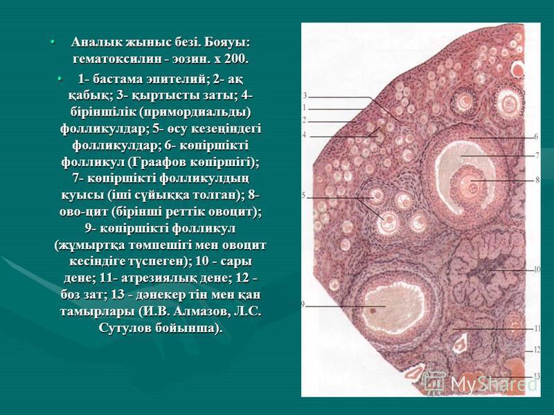 Аналык жыныс безі. Бояуы: гематоксилин - эозин. х 200. Аналык жыныс безі. Бояуы: гематоксилин - эозин. х 200. 1- бастама эпителий; 2- ақ қабық; 3- қыртысты заты; 4- біріншілік (примордиальды) фолликулдар; 5- өсу кезеңіндегі фолликулдар; 6- көпіршікті