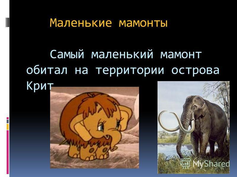 Шерстистый мамонт Шерстистый мамонт – самое экзотическое животное ледникового периода, является его символом. Высотой они достигали 3,5 м и весили 4-6 тонн. От холода мамонтов защищали густая длинная шерсть с развитым подшёрстком, а также слой жира т