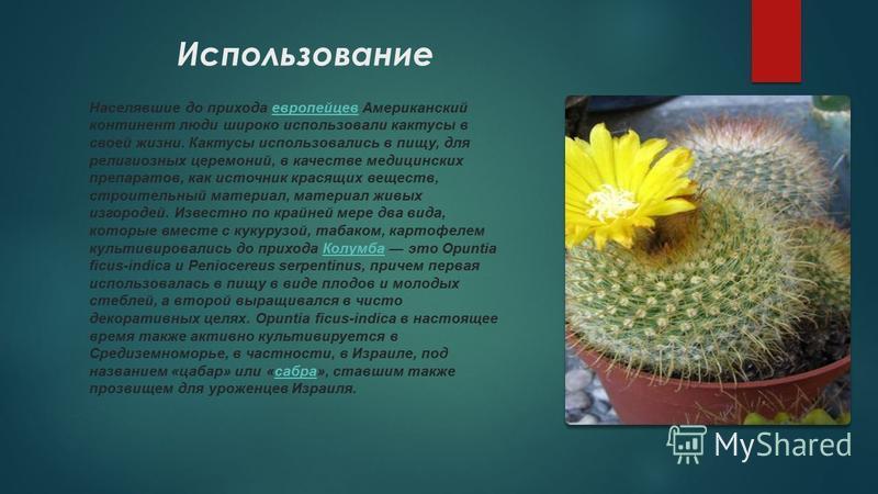 Использование Населявшие до прихода европейцев Американский континент люди широко использовали кактусы в своей жизни. Кактусы использовались в пищу, для религиозных церемоний, в качестве медицинских препаратов, как источник красящих веществ, строител
