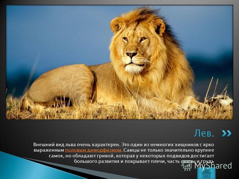 Внешний вид льва очень характерен. Это один из немногих хищников с ярко выраженным половым диморфизмом. Самцы не только значительно крупнее самок, но обладают гривой, которая у некоторых подвидов достигает большого развития и покрывает плечи, часть с