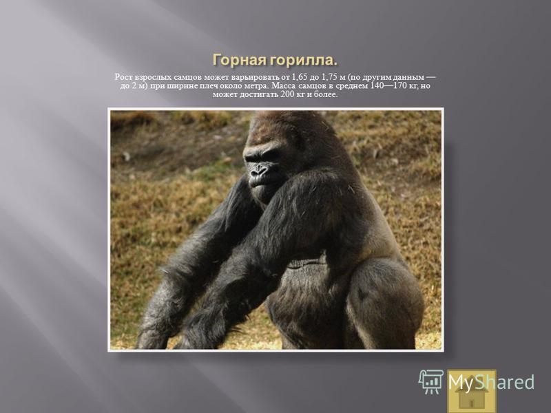 Рост взрослых самцов может варьировать от 1,65 до 1,75 м ( по другим данным до 2 м ) при ширине плеч около метра. Масса самцов в среднем 140170 кг, но может достигать 200 кг и более.