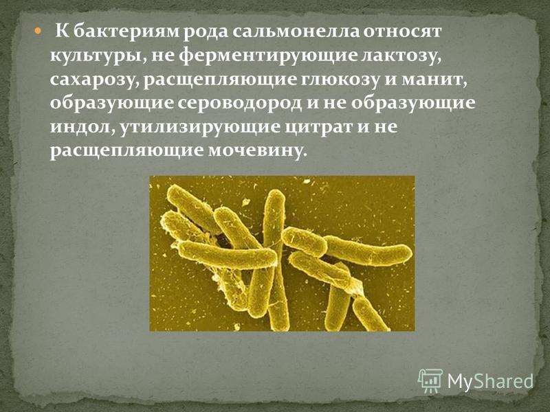 К бактериям рода сальмонелла относят культуры, не ферментирующие лактозу, сахарозу, расщепляющие глюкозу и манит, образующие сероводород и не образующие индол, утилизирующие цитрат и не расщепляющие мочевину.