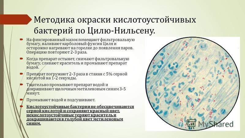 Методика окраски кислотоустойчивых бактерий по Цилю-Нильсену. На фиксированный мазок помещают фильтровальную бумагу, наливают карболовый фуксин Циля и осторожно нагревают на горелке до появления паров. Операцию повторяют 2-3 раза. Когда препарат осты