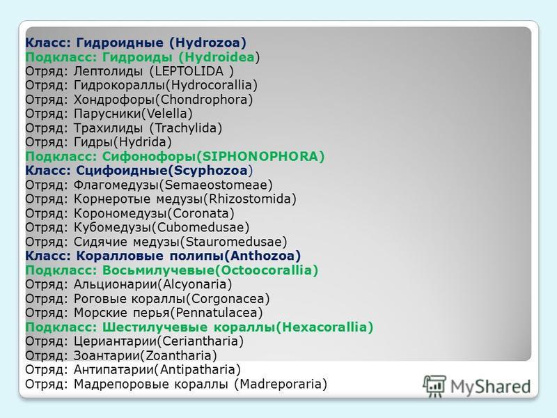 Класс: Гидроидные (Hydrozoa) Подкласс: Гидроиды (Hydroidea) Отряд: Лептолиды (LEPTOLIDA ) Отряд: Гидрокораллы(Hydrocorallia) Отряд: Хондpофору(Chondrophora) Отряд: Парусники(Velella) Отряд: Трахилиды (Trachylida) Отряд: Гидру(Hydrida) Подкласс: Сифон