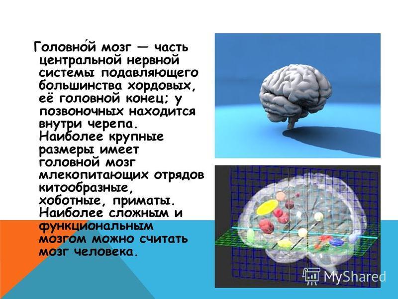 Головной мозг часть центральной нервной системы подавляющего большинства хордовых, её головной конец; у позвоночных находится внутри черепа. Наиболее крупные размеры имеет головной мозг млекопитающих отрядов китообразные, хоботные, приматы. Наиболее