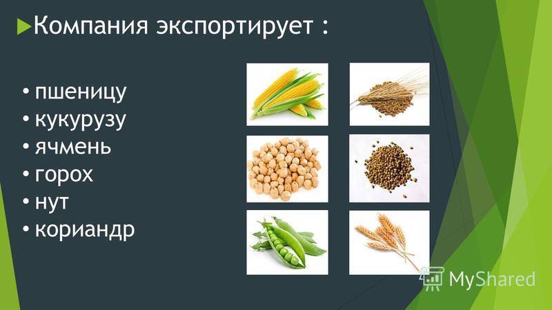 Компания экспортирует : пшеницу кукурузу ячмень горох нут кориандр