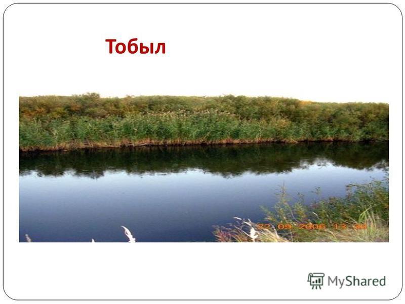Тобыл