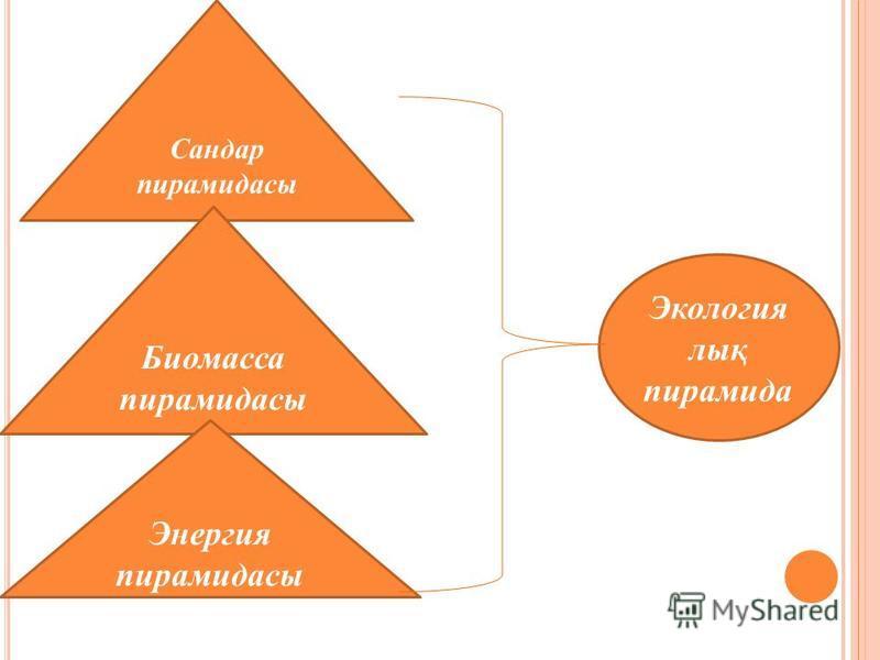Экология лық пирамида Сандар пирамидасы Биомасса пирамидасы Энергия пирамидасы