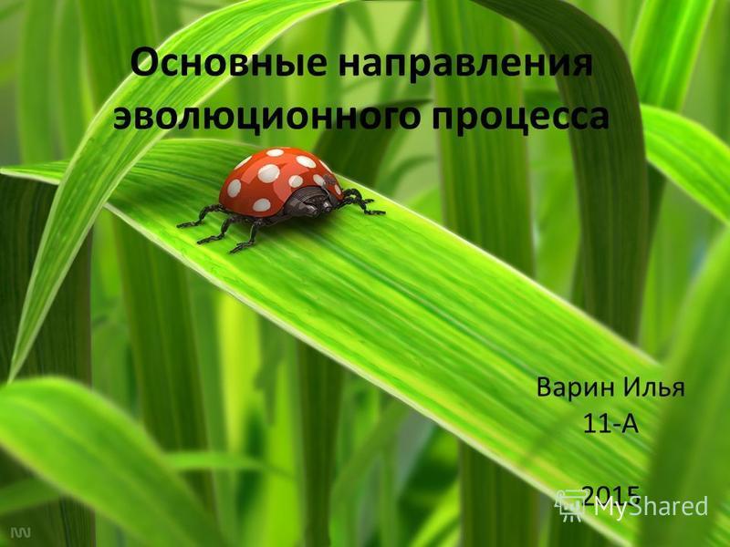 Основные направления эволюционного процесса Варин Илья 11-А 2015