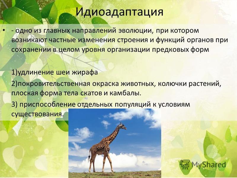 Идиоадаптация - одно из главных направлений эволюции, при котором возникают частные изменения строения и функций органов при сохранении в целом уровня организации предковых форм 1)удлинение шеи жирафа 2)покровительственная окраска животных, колючки р