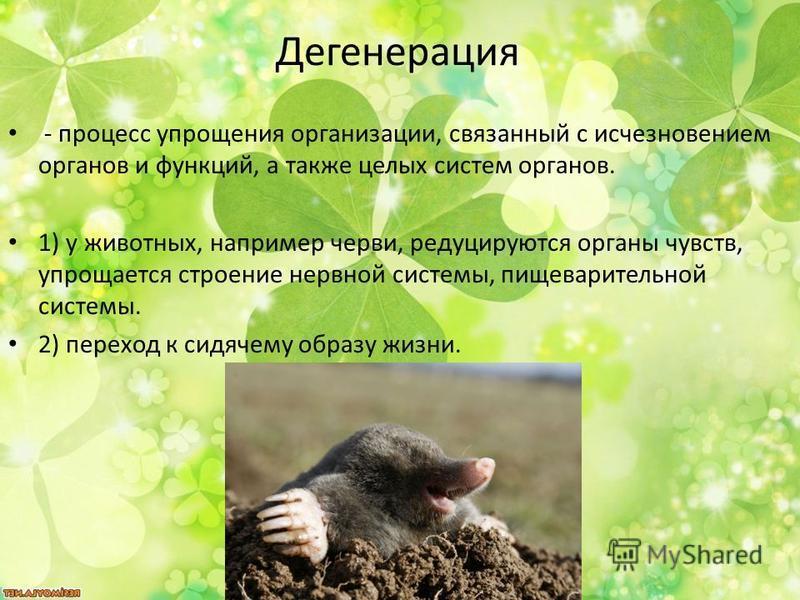 Дегенерация - процесс упрощения организации, связанный с исчезновением органов и функций, а также целых систем органов. 1) у животных, например черви, редуцируются органы чувств, упрощается строение нервной системы, пищеварительной системы. 2) перехо