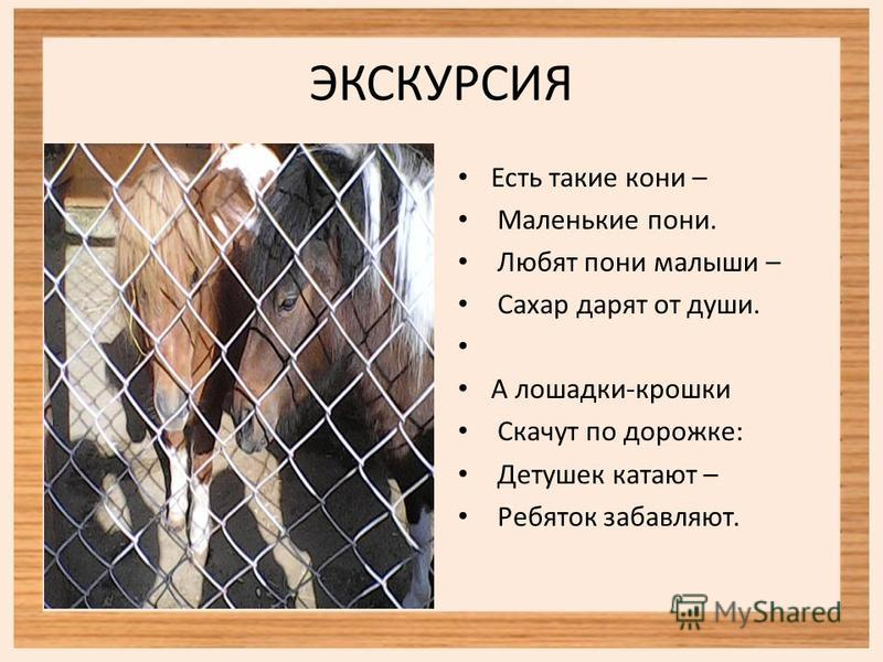 Есть такие кони – Маленькие пони. Любят пони малыши – Сахар дарят от души. А лошадки-крошки Скачут по дорожке: Детушек катают – Ребяток забавляют.