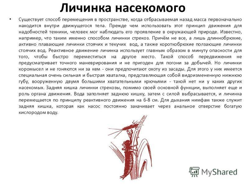Личинка насекомого Существует способ перемещения в пространстве, когда отбрасываемая назад масса первоначально находится внутри движущегося тела. Прежде чем использовать этот принцип движения для надобностей техники, человек мог наблюдать его проявле