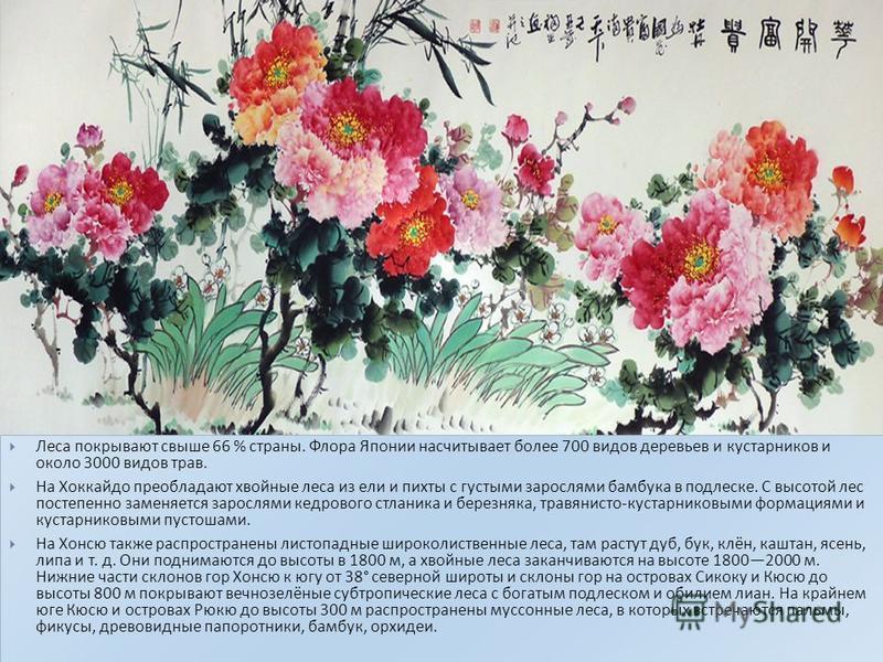 Леса покрывают свыше 66 % страны. Флора Японии насчитывает более 700 видов деревьев и кустарников и около 3000 видов трав. На Хоккайдо преобладают хвойные леса из ели и пихты с густыми зарослями бамбука в подлеске. С высотой лес постепенно заменяется