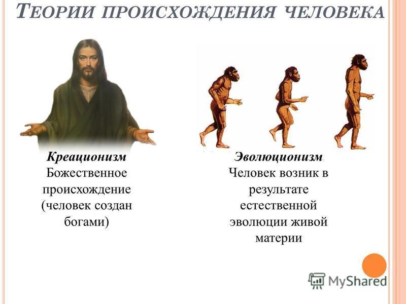 Т ЕОРИИ ПРОИСХОЖДЕНИЯ ЧЕЛОВЕКА Креационизм Божественное происхождение (человек создан богами) Эволюционизм Человек возник в результате естественной эволюции живой материи