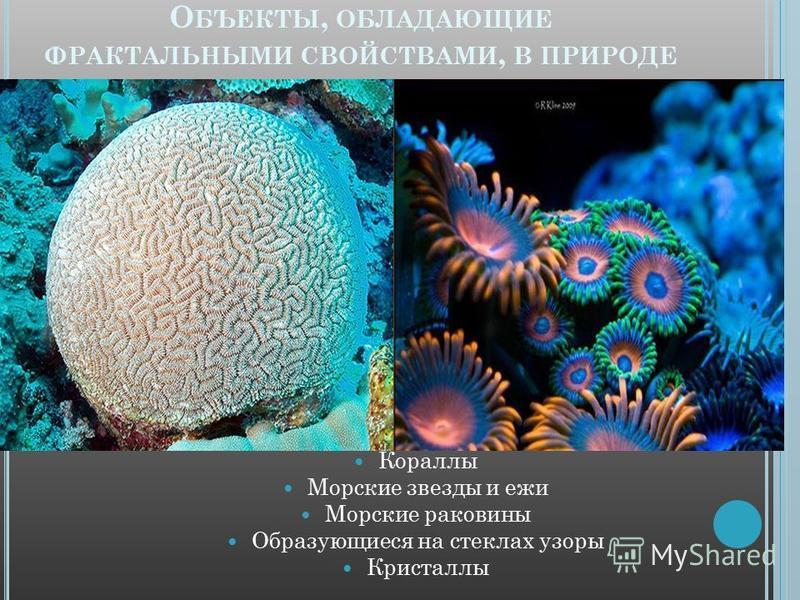 О БЪЕКТЫ, ОБЛАДАЮЩИЕ ФРАКТАЛЬНЫМИ СВОЙСТВАМИ, В ПРИРОДЕ Кораллы Морские звезды и ежи Морские раковины Образующиеся на стеклах узоры Кристаллы