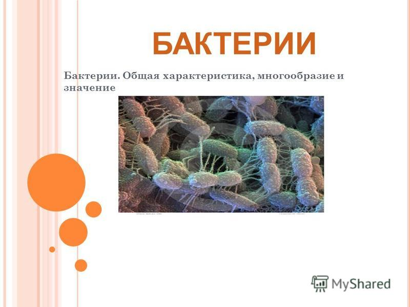 БАКТЕРИИ Бактерии. Общая характеристика, многообразие и значение