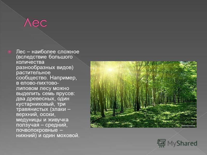 Лес – наиболее сложное (вследствие большого количества разнообразных видов) растительное сообщество. Например, в елово-пихтово- липовом лесу можно выделить семь ярусов: два древесных, один кустарниковый, три травянистых (злаки – верхний, осоки, медун