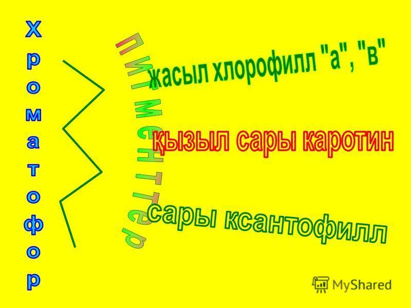 Қызыл Қоңыр Диатом Жасыл Алтындай сары