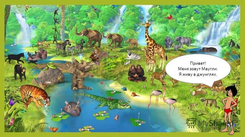 Привет! Меня зовут Маугли. Я живу в джунглях.