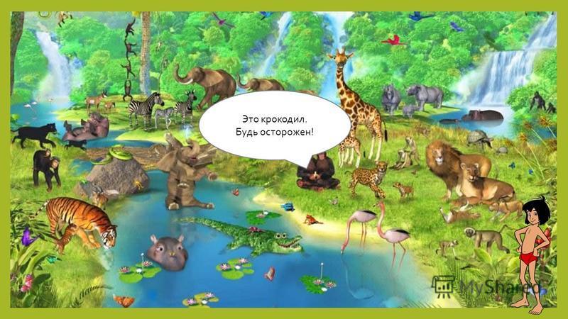 Это крокодил. Будь осторожен!