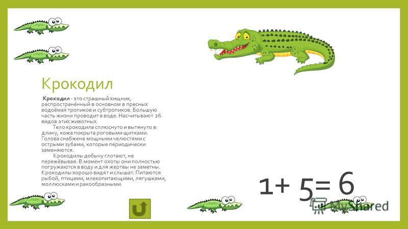 Крокодил Крокодил - это страшный хищник, распространённый в основном в пресных водоёмах тропиков и субтропиков. Большую часть жизни проводит в воде. Насчитывают 26 видов этих животных. Тело крокодила сплюснуто и вытянуто в длину, кожа покрыта роговым